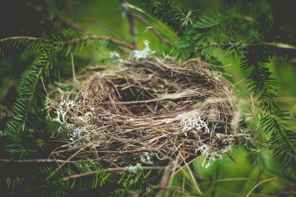 Empty Nester Romance: How to Rekindle the Fire